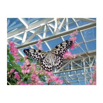 butterflyHouse_big